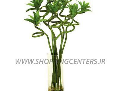 گل لاکی بامبو